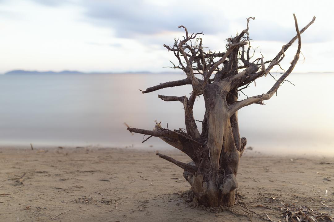 Les corps de bois